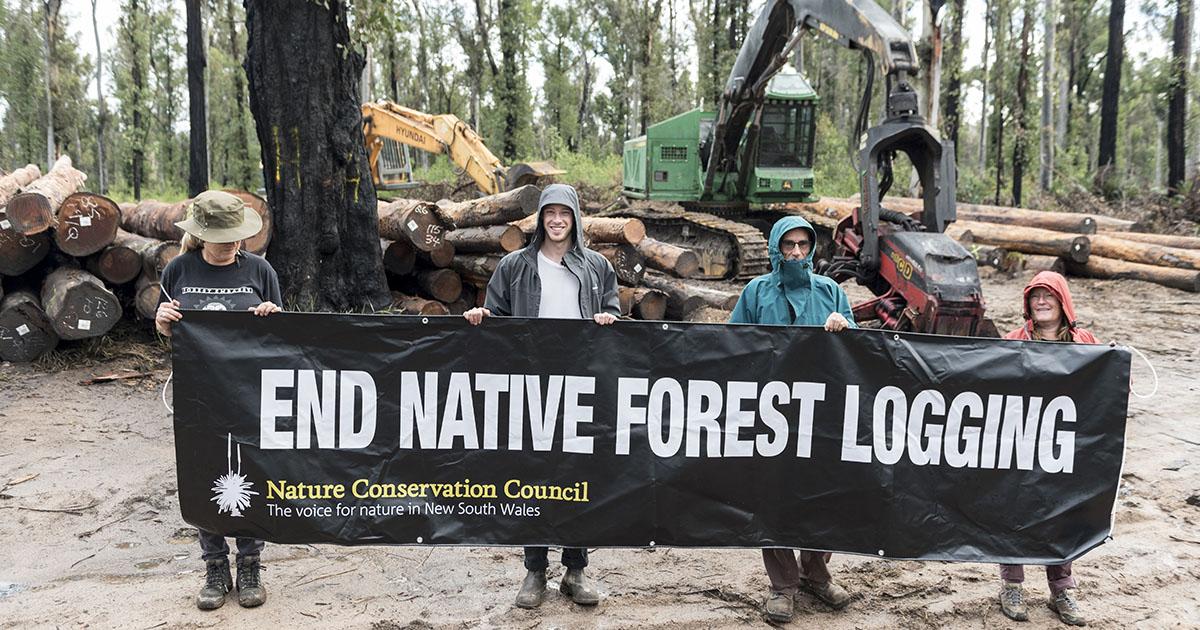 End Native Forest Logging