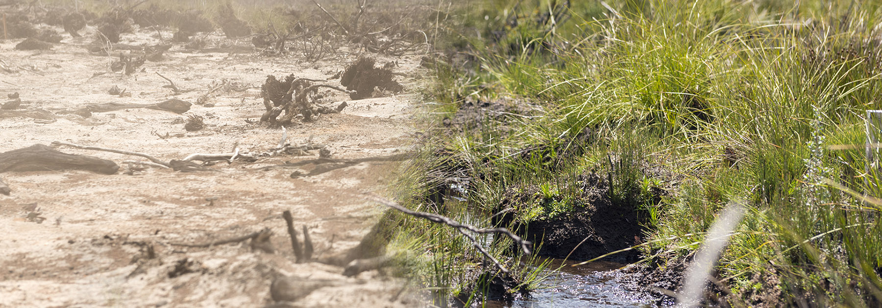 Save wetlands from coal mining