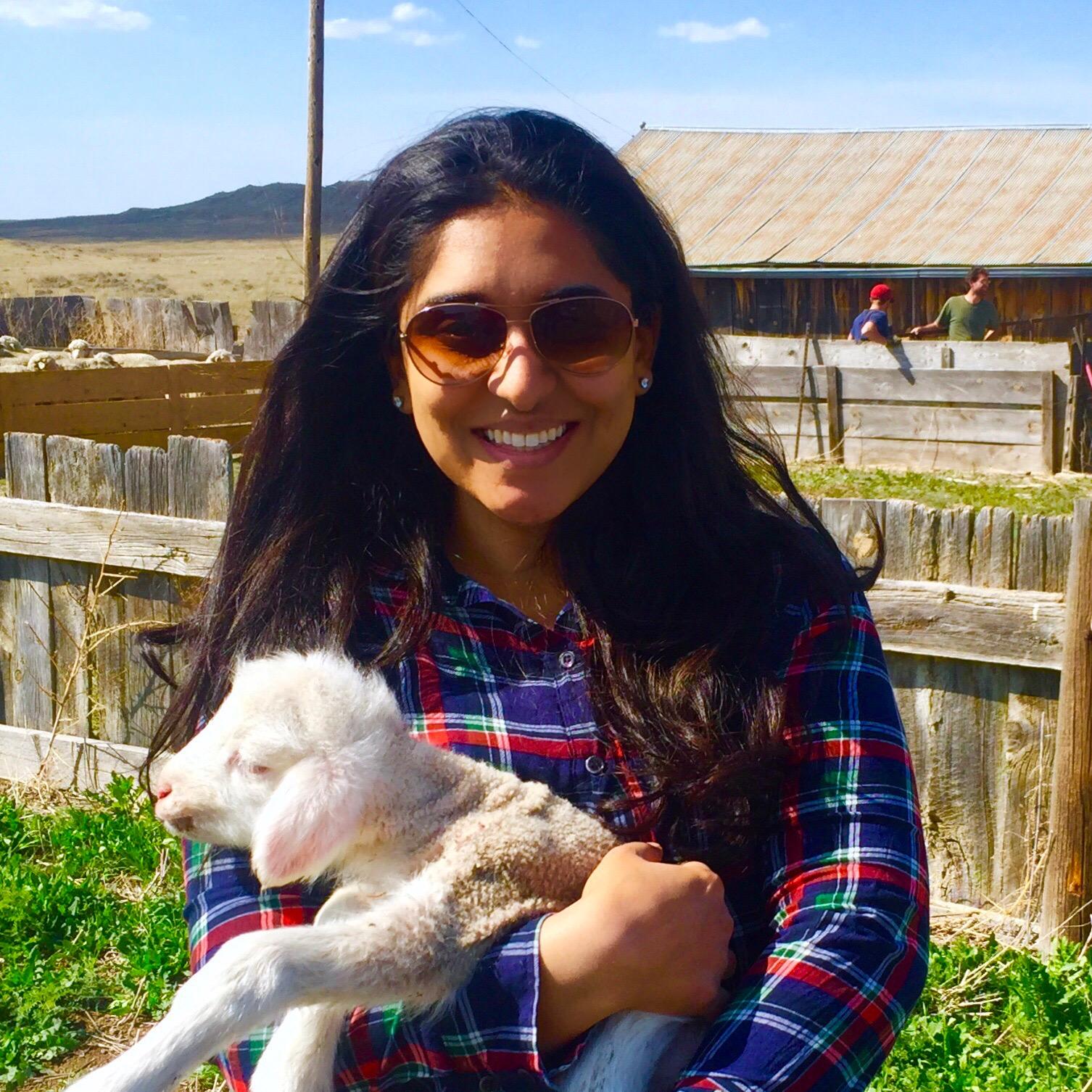 Naveen holding a newborn lamb