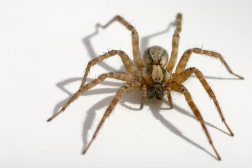 spider6queensexterminator.jpg