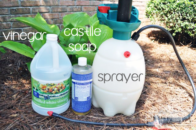 Bottle of vinegar, castile soap, and sprayer