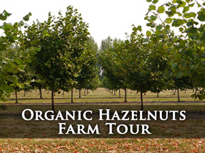 Click for Organic Hazelnuts Farm Tour