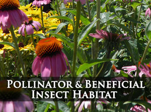 Click for Pollinator & Beneficial Insect Habitat