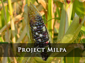 Project Milpa