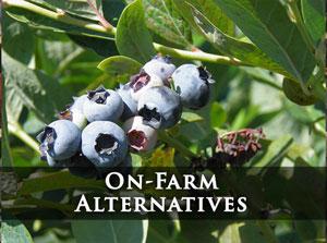 On-Farm Alternatives