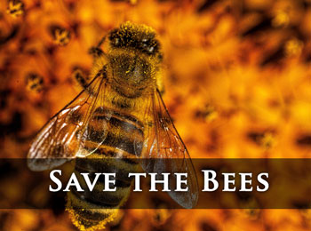 Click for Save the Bees