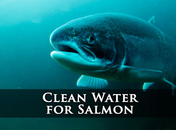 Click for Clean Water for Salmon