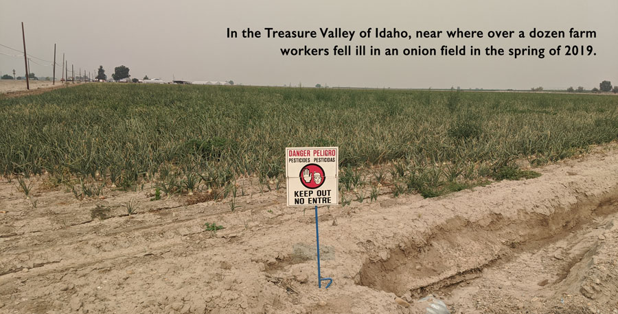Field in the Treasure Valley of Idaho, near where over a dozen farm workers fell ill in an onion field in the spring of 2019