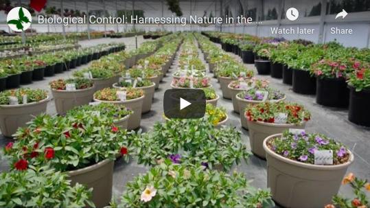 Organic Hazelnut Video