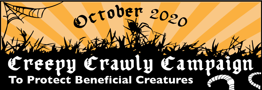 Creepy Crawly Campaign