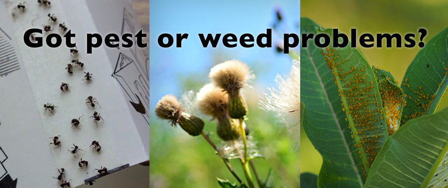 Got pest or weed problems?
