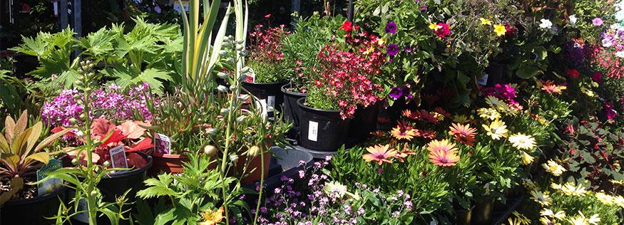 Colorful display of various flowering plants in nursery
