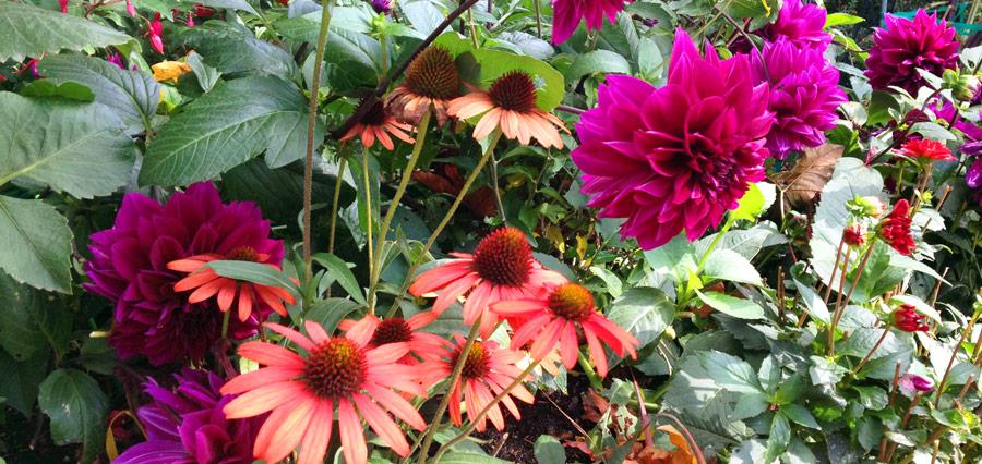 Flowers_1531.jpg