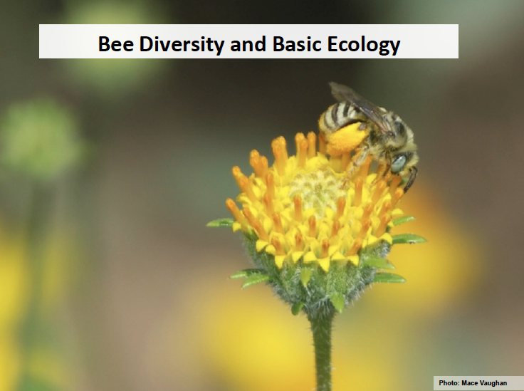 2._Bee_Biology.png