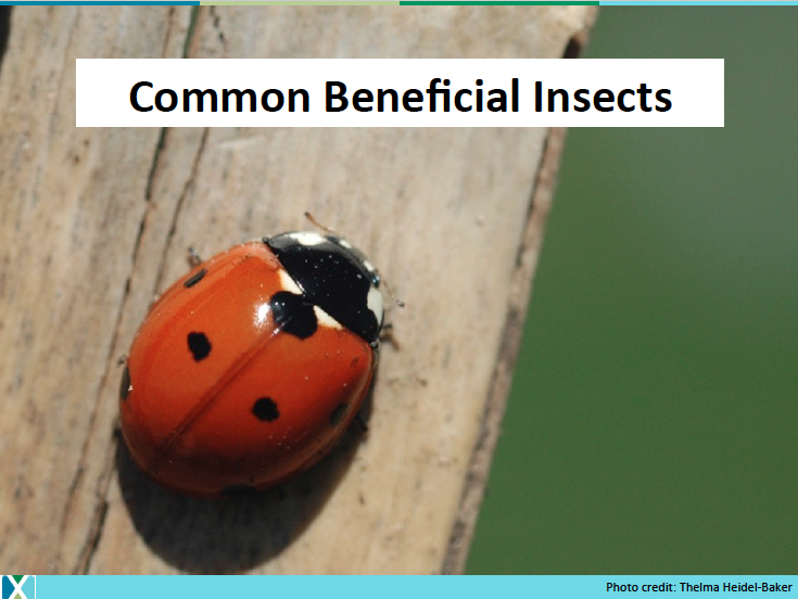 3._Beneficial_Insects.png
