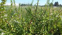 Pollinator-Hedge-Small.jpg