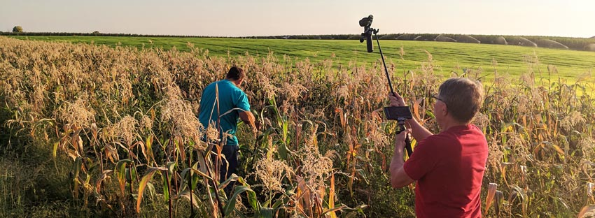 Person holding video camera, filming someone in the middle of a corn field