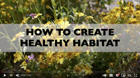 How to Create Healthy Habitat Video