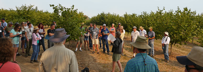 Farm tour participants gather around a speaker, with rows of hazelnut trees in background