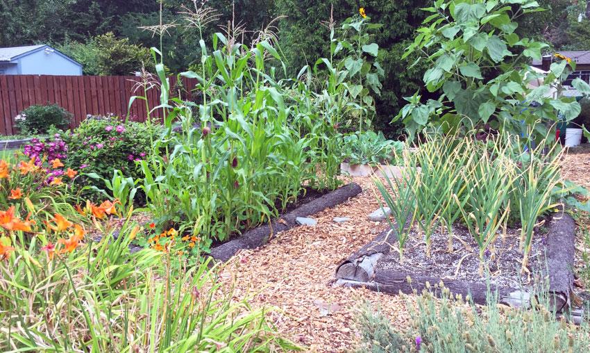 Garden-TMiller.jpg