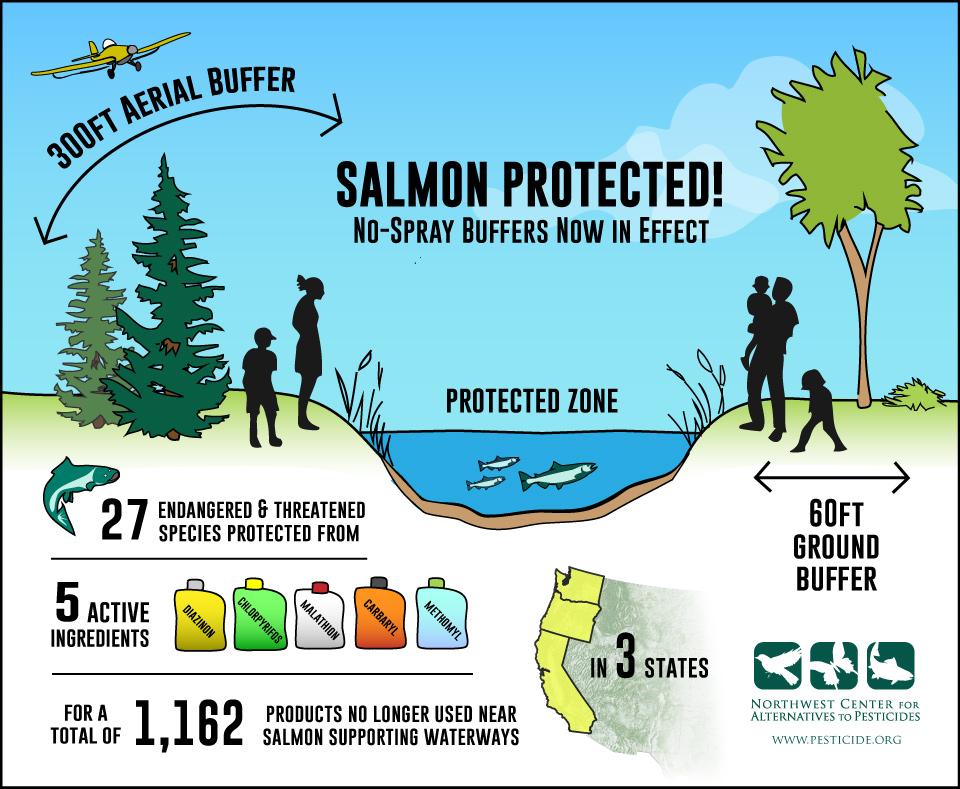 SalmonBuffersWeb.jpg