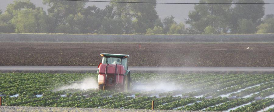 Spraying strawberries