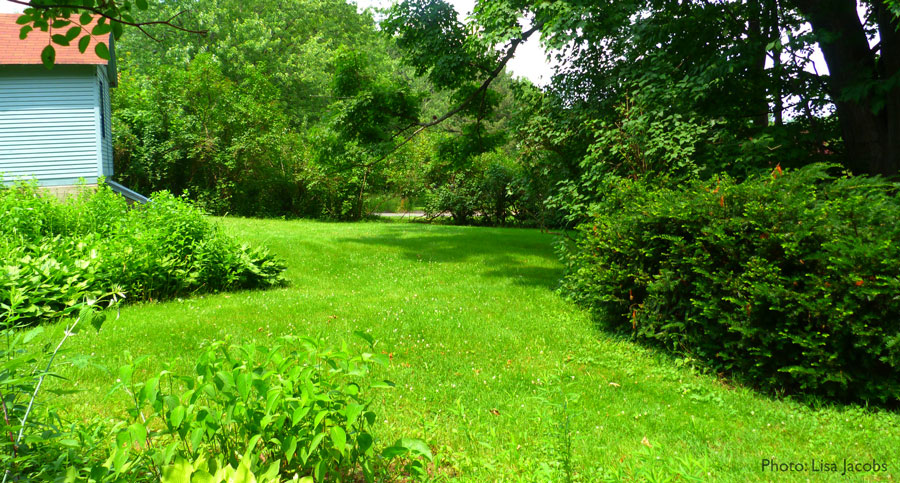 Yard with a mix of grass, shrubs, shade and sun
