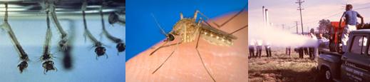 mosquitostrip.jpg