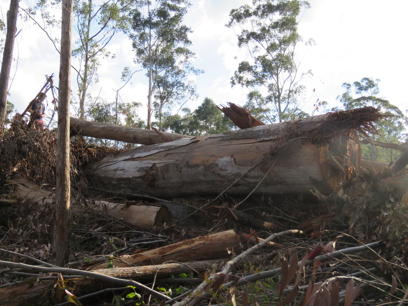 Koala Habitat smashed