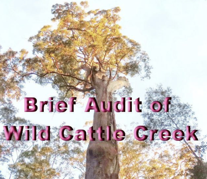 NEFA_Brief_Audit_of_Wild_Cattle_Creek.jpg