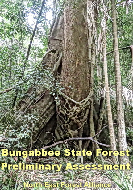 BUNGABBEE_STATE_FOREST__PRELIMINARY_ASSESSMENT.jpg