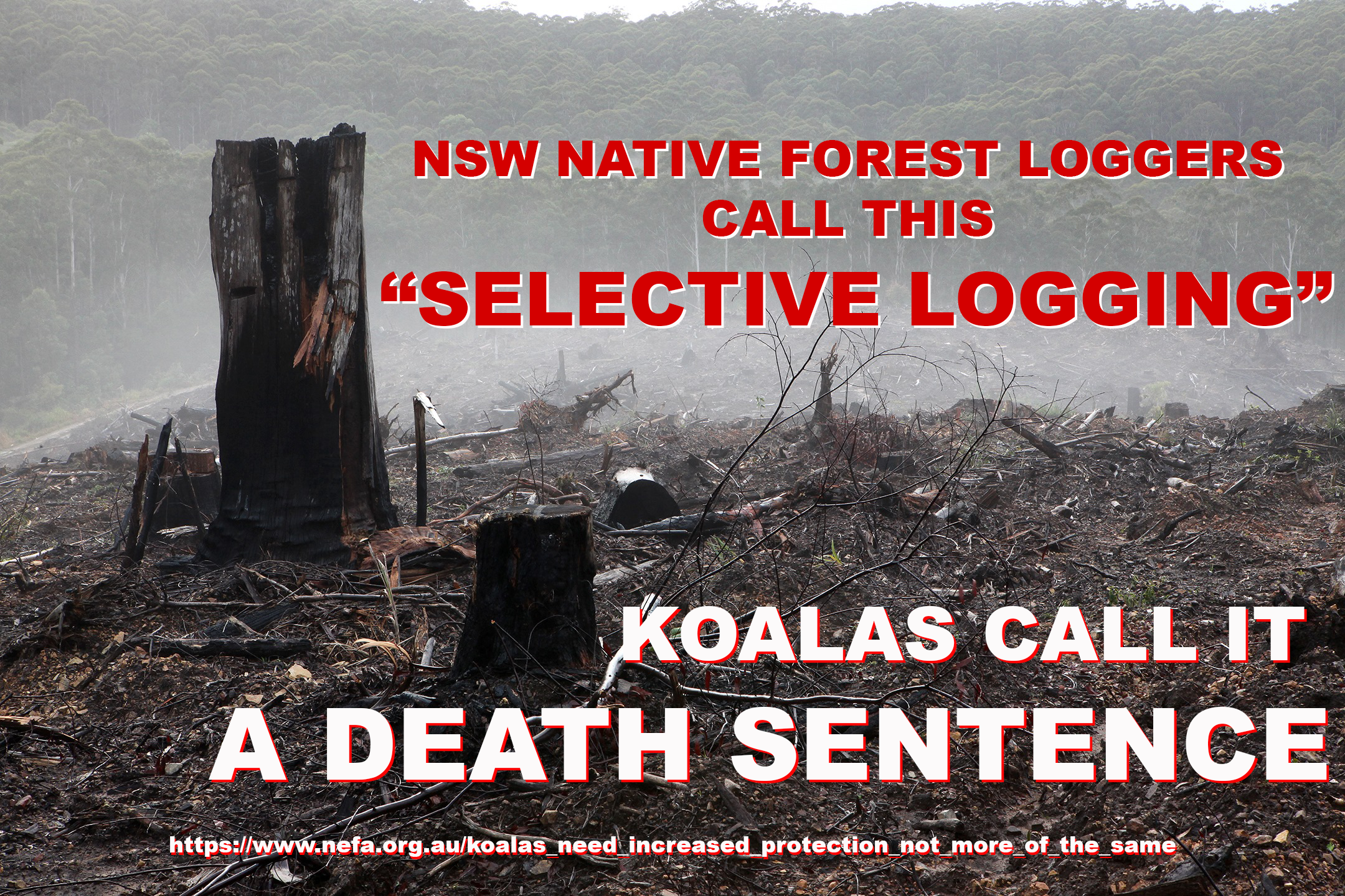 """NSW NATIVE FOREST LOGGERS  CALL THIS """"SELECTIVE LOGGING"""" KOALAS CALL IT  A DEATH SENTENCE"""