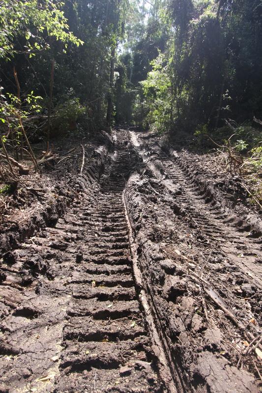 Road thru rainforest