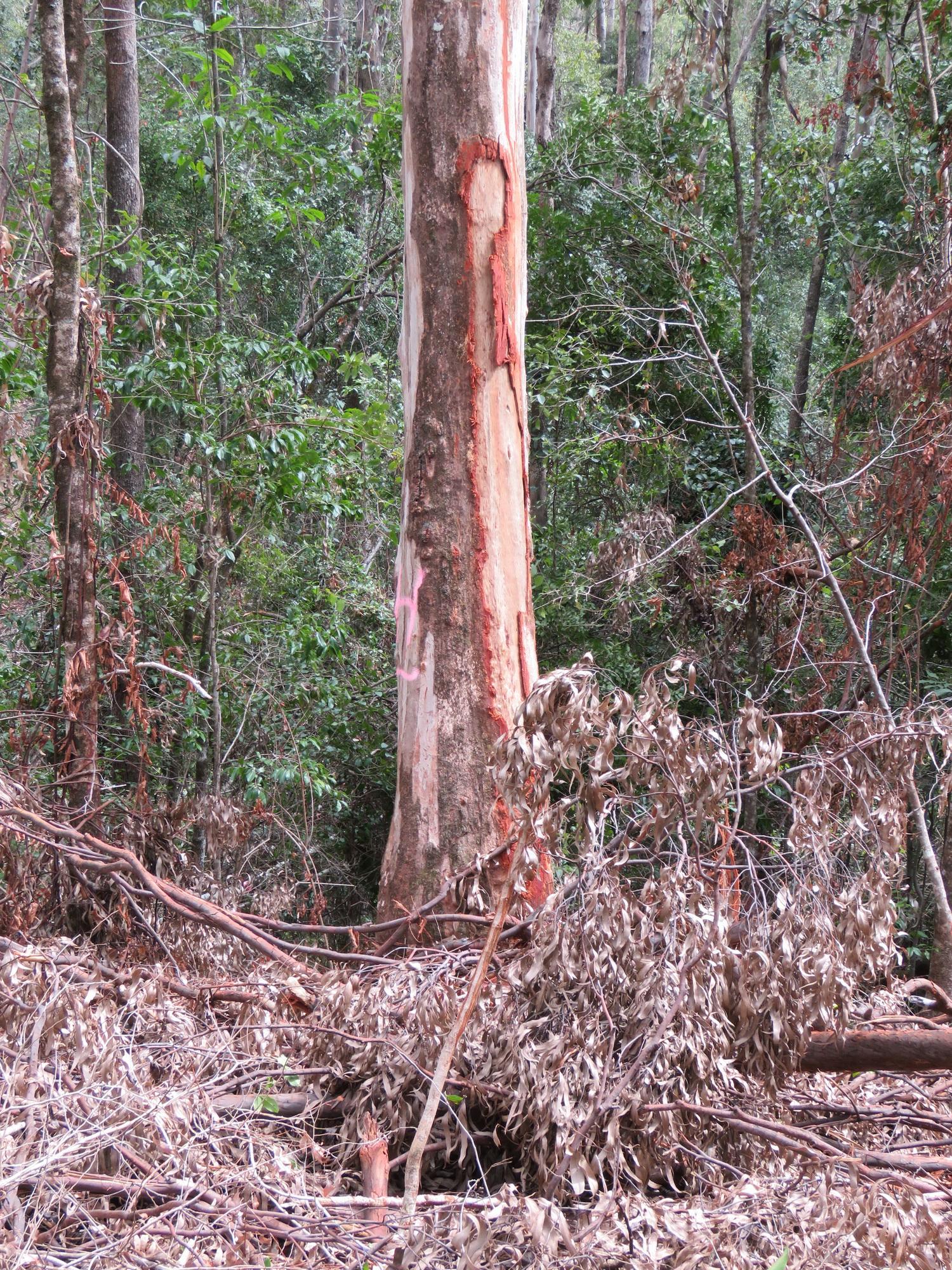 Damaged H tree