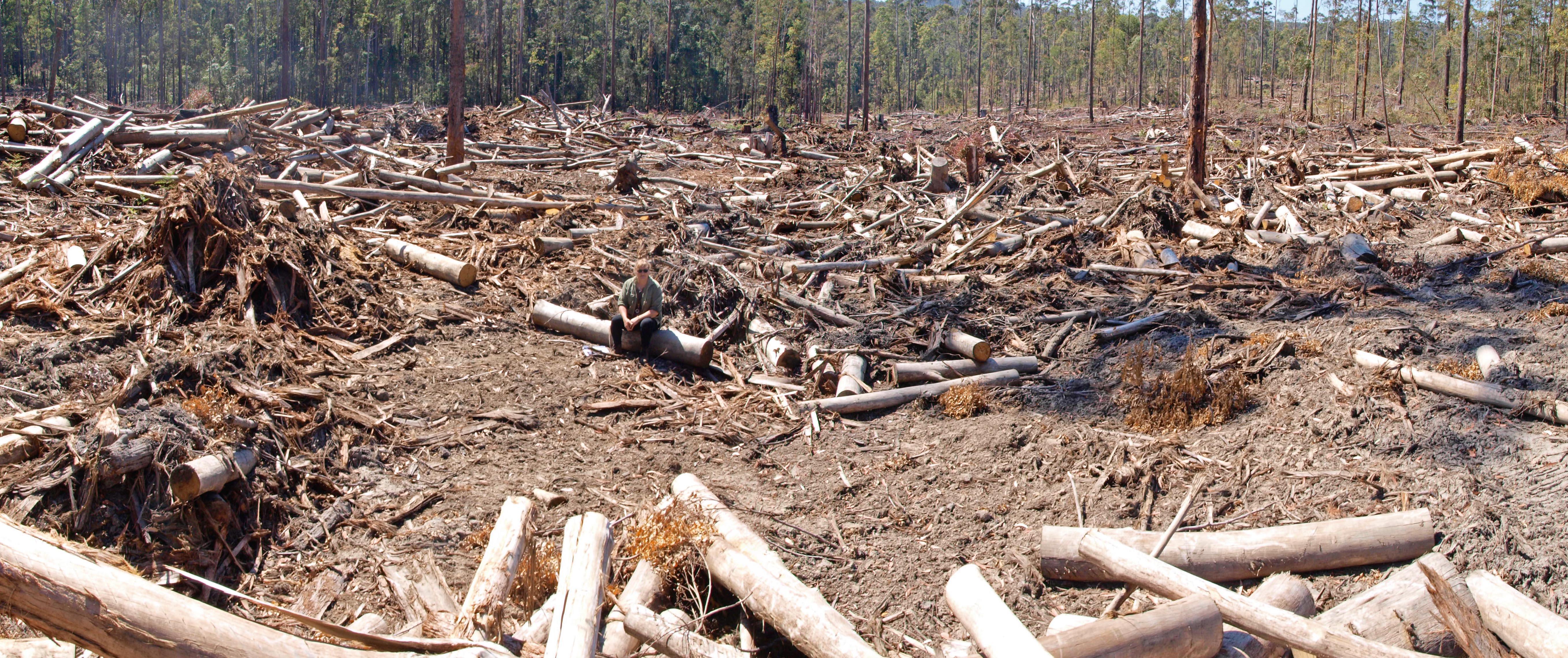 lorne logging