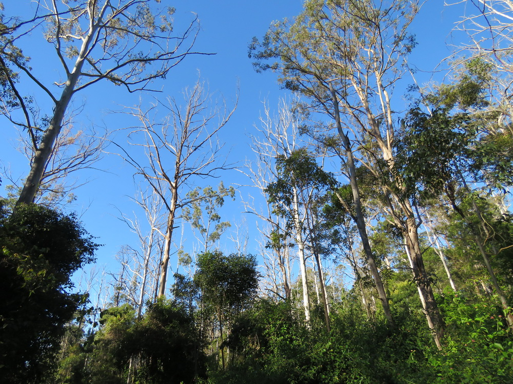 Logging dieback the Premiers Dept didn't want to see