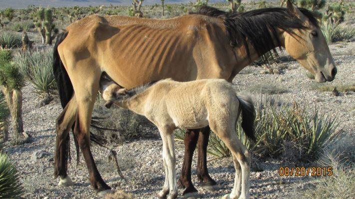 Starving_Horse.JPG