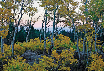 photo_wnc_rose_aspen_mhammon_96d_400x272.jpg
