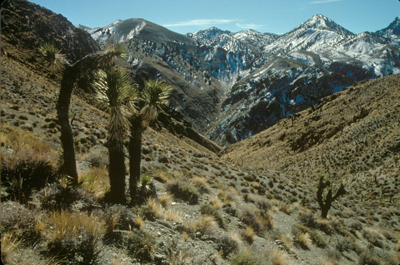 photo_grapevinemtns_kpetersen_400.jpg