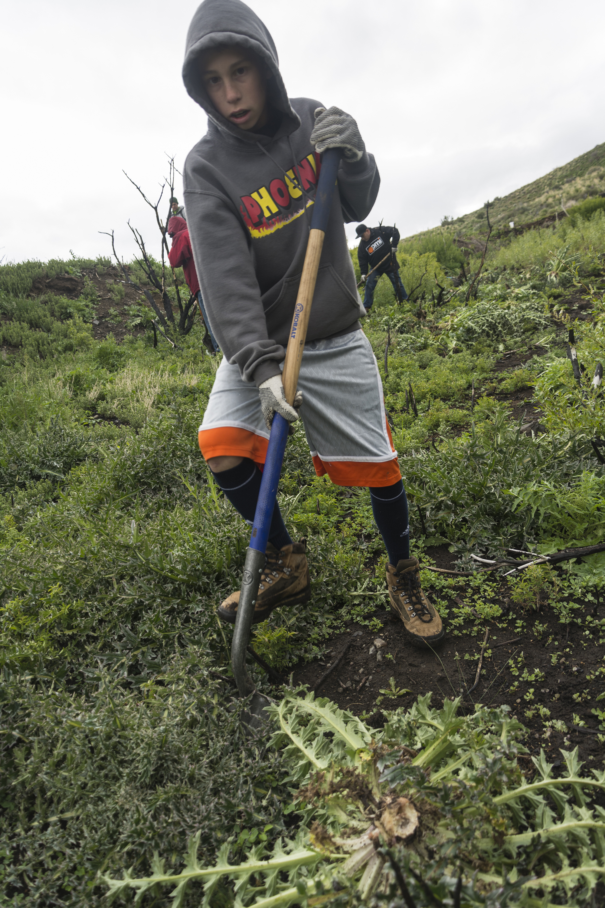 great-community-clean-up---mt-rose-wilderness-weed-warriors_26194047303_o.jpg
