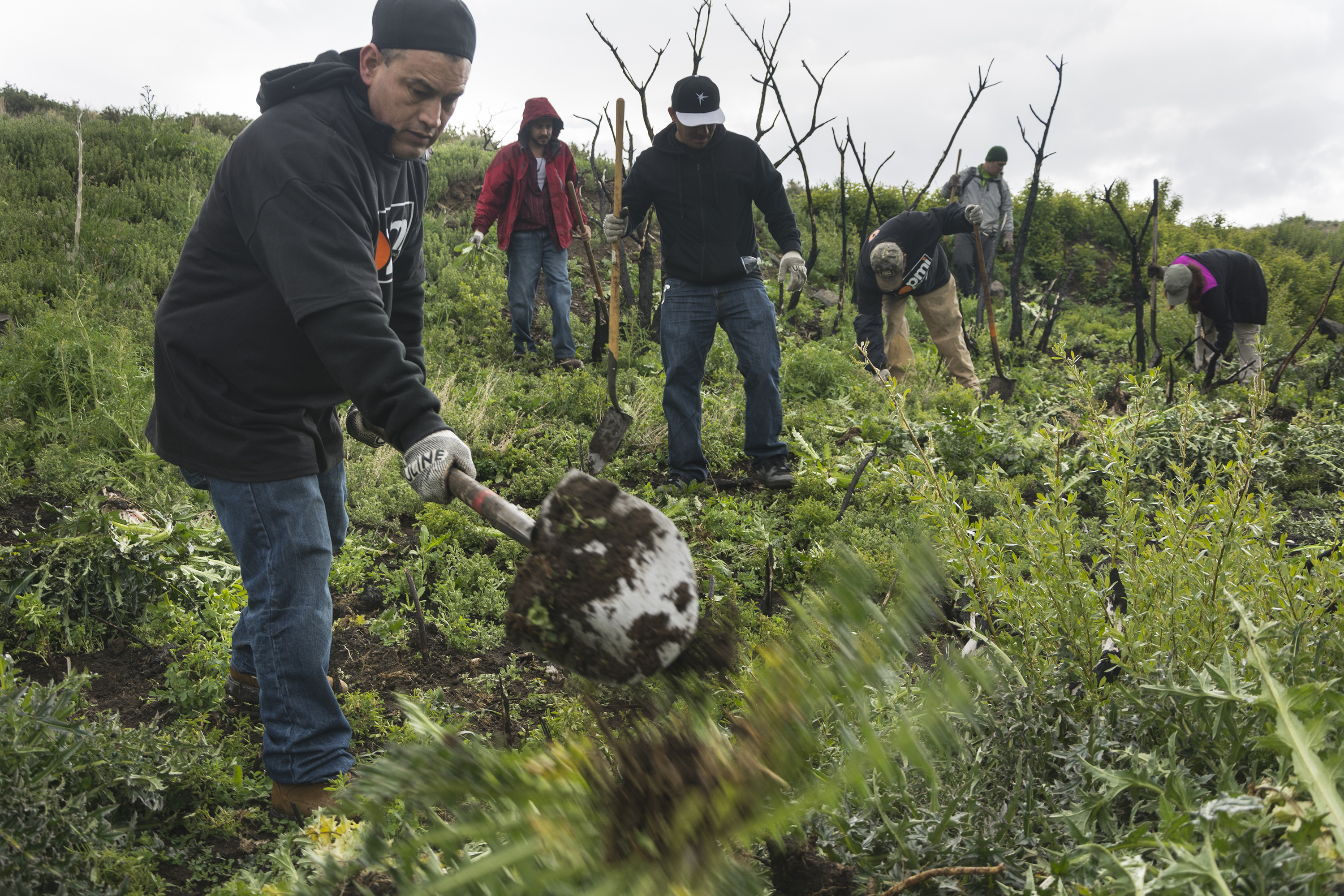 great-community-clean-up---mt-rose-wilderness-weed-warriors_26704592912_o.jpg