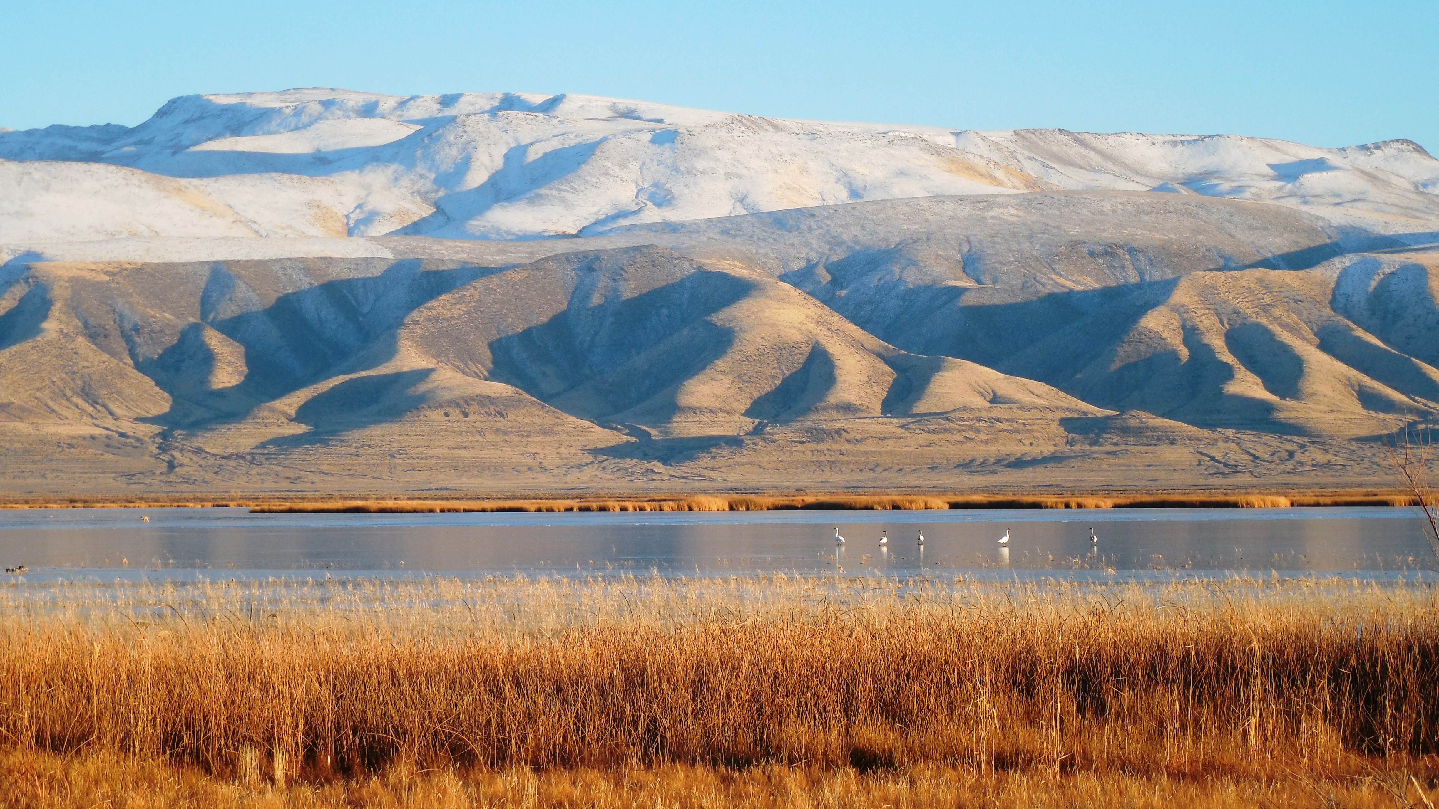 Stillwater_Range_from_Stillwater_Refuge_with_Tundra_Swans_Ryan_Carle.jpg
