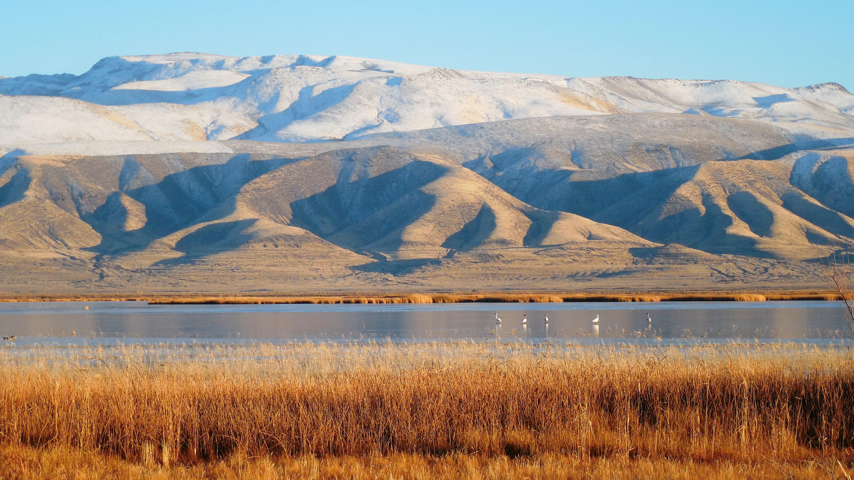 Stillwater_Range_from_Stillwater_Refuge_with_Tundra_Swans_Ryan_Carle.jpg