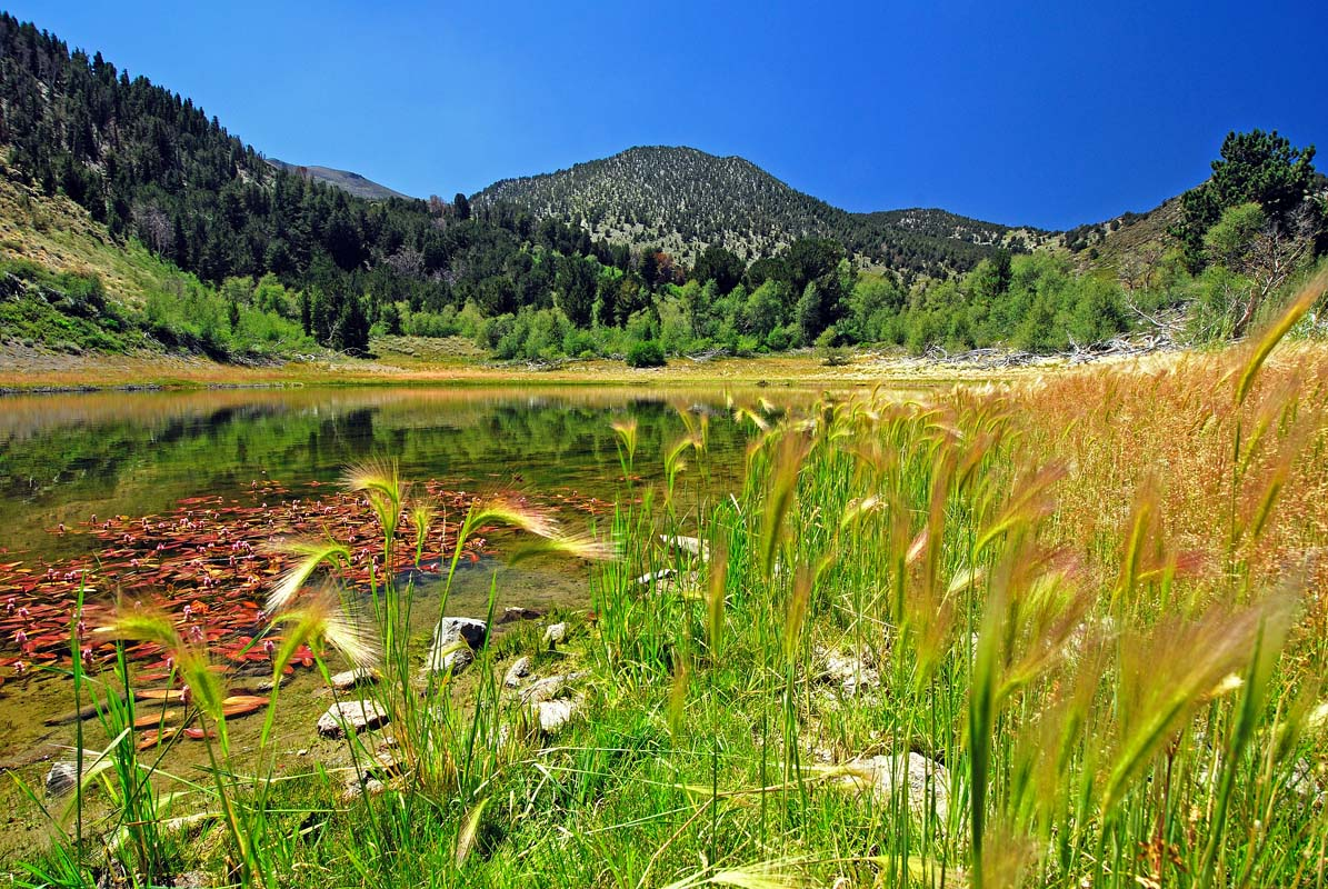 Mt_Rose_W_Churches_Pond_kuz.jpg