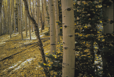photo_grafton_aspen_ssmith_400.jpg