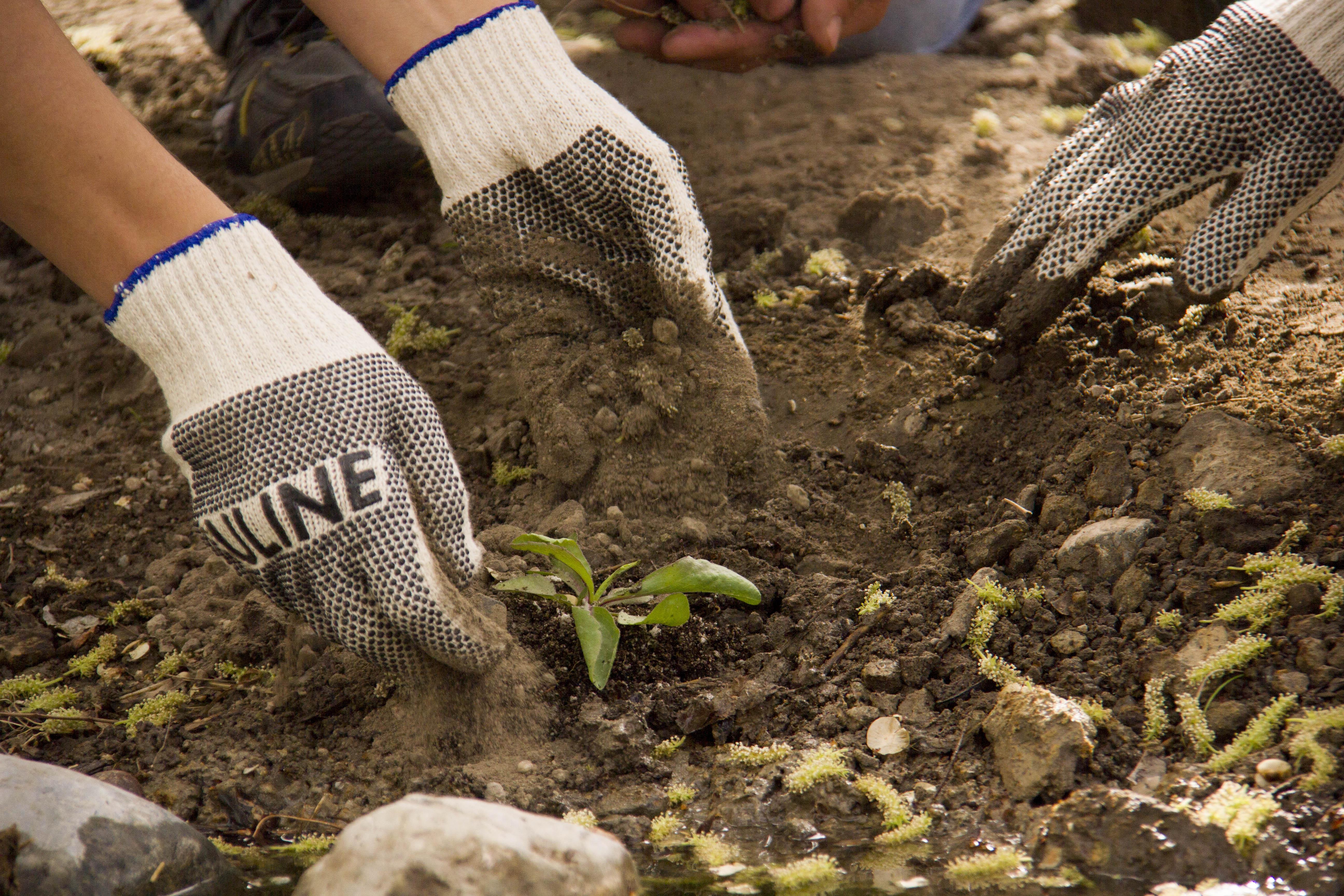 DNWR_Planting_130330_jwitt_003_low.jpg