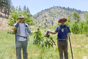06-08-2013_mt_rose_weed2_RA_27_volunteer5.jpg