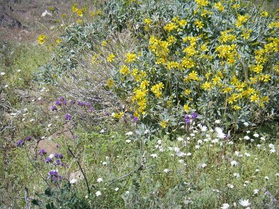 Desert wildflowers © Kate Prengaman