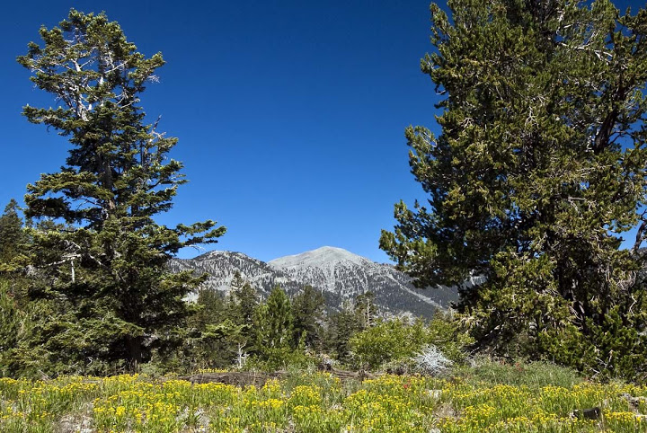 Mt_Charleston_W__Griffith_Pk_Tr_kuz-11.jpg