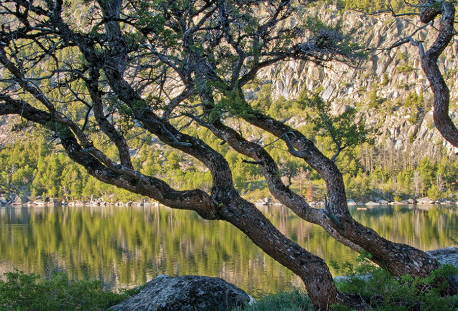 bluelakes_trees_bbeffort_150.jpg